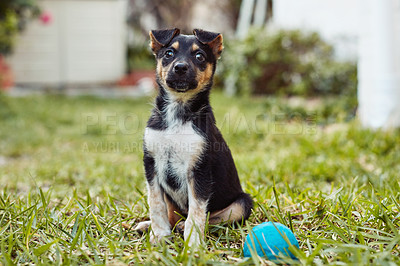 Buy stock photo Shot of an adorable little puppy playing with a ball outside