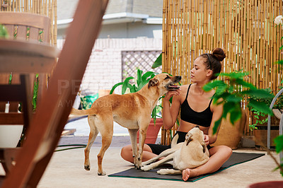 Buy stock photo Shot of a young woman playing with her dogs after doing yoga at home