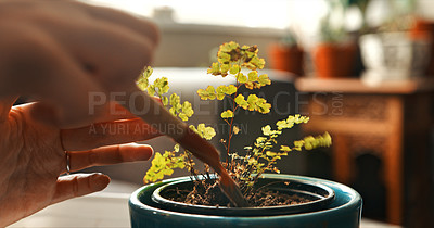 Buy stock photo Cropped shot of an unrecognizable woman potting a plant at home