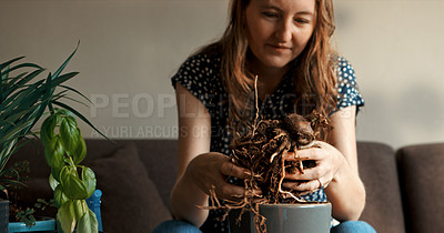 Buy stock photo Cropped shot of a woman sitting and digging up the roots of her pot plant for repotting