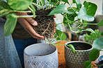 Give your home the gift of greenery