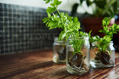 Buy stock photo Shot of plants growing in glass jars on a table at home