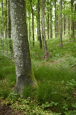Buy stock photo A photo of forest beauty in  springtime