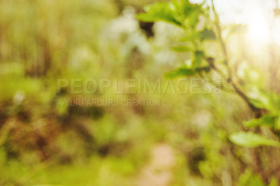 Buy stock photo Shot of green leaves growing on a tree in nature