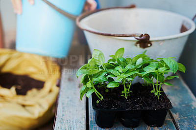 Buy stock photo Shot of a luscious green pot plant on a table at home