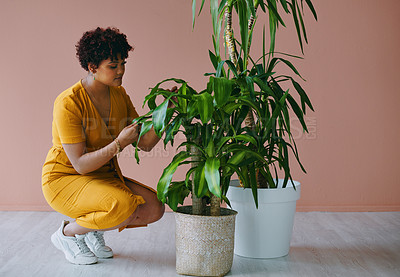 Buy stock photo Shot of a young woman tending to plants at home