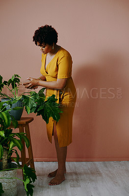 Buy stock photo Shot of a young woman watering plants at home