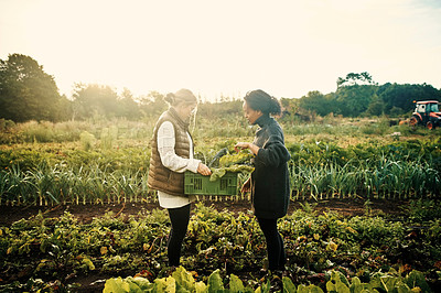 Buy stock photo Shot of two young women working on a farm