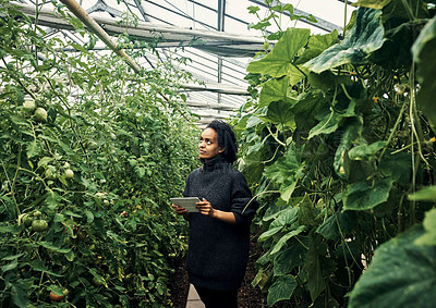 Buy stock photo Shot of a young woman using a digital tablet while working in a greenhouse