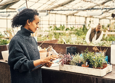 Buy stock photo Shot of a young woman working in a greenhouse