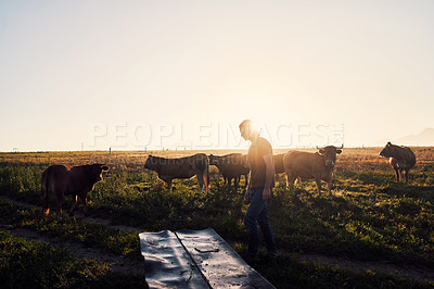 Buy stock photo Shot of a young man working on a cattle farm