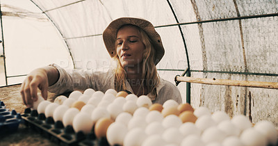 Buy stock photo Shot of a young woman sorting eggs in a farm shed
