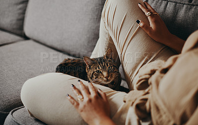 Buy stock photo Cropped shot of a cat relaxing on the couch with her owner