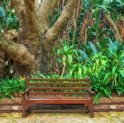 Buy stock photo Bench, Flowers, plants and trees in Kirstenbosch Botanical Gardens in Cape Town, South Africa,