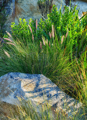 Buy stock photo Flowers, plants and trees on mountain side in South Africa, Western Cape