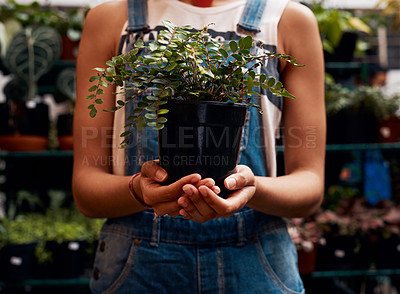 Buy stock photo Shot of an unrecognisable woman holding a potted plant while working in a garden centre