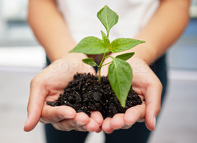 Buy stock photo Shot of an anonymous person holding a plant seedling to be planted