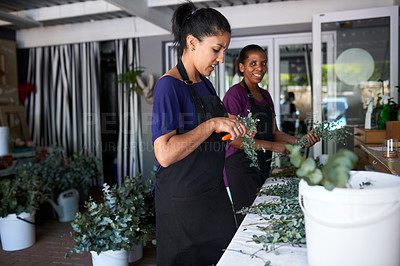 Buy stock photo Shot of two young woman pruning the flowers at her job in a floral store