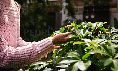 Buy stock photo Shot of a woman browsing through a selection of plants in a nursery