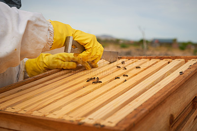 Buy stock photo Shot of a beekeeper working with a hive frame on a farm