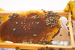 What's good for the hive is good for the bees