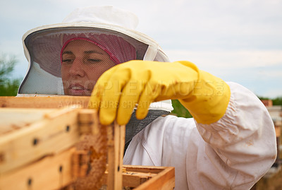 Buy stock photo Shot of a beekeeper opening a hive frame on a farm