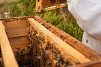 Beauty is in the hive of the bee holder
