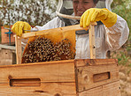 The honey making life is the sweet life
