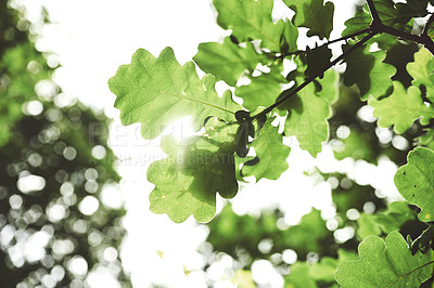 Buy stock photo Low angle shot of green leaves growing in nature