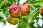 An apple per day keeps the doctor away