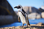 Up close and personal with penguins